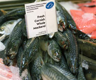 Co-operative supports campaign to reduce discarded fish