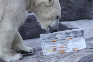 Spar donates conference leftovers to animals at Prague Zoo