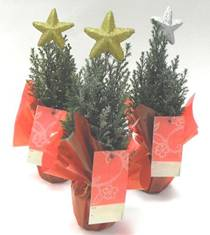 Co-operative launches range of festive flowers and plants for Christmas 2012