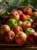 Royal Agricultural University and British Apples and Pears launches new sustainability report about how British apples are going 'green'