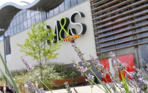 Marks & Spencer is first UK retailer to achieve wildlife benchmark