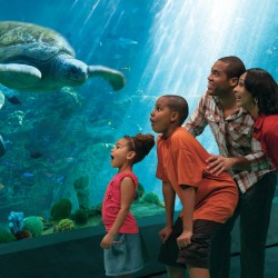 Omnico technology enhances visitor experience at SeaWorld Theme Parks