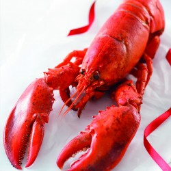 Lidl launches first MSC certified whole lobster for Christmas…at £4.99