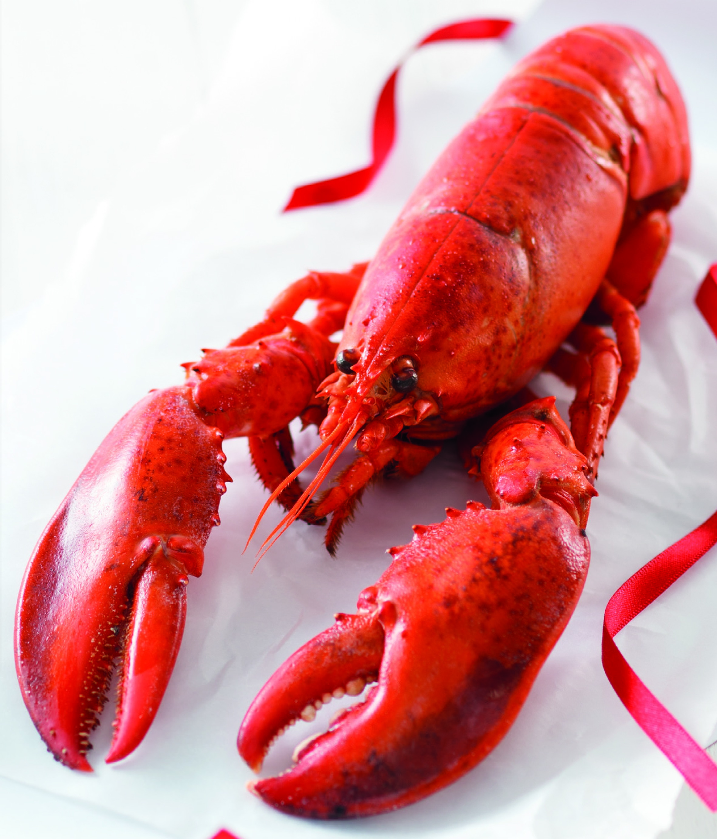 Lidl launches first MSC certified whole lobster for ...