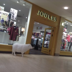 Digital growth offsets sales decline in stores at Joules