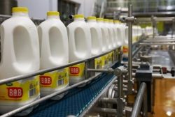 Arla urges UK Government to protect British dairy farming in Brexit negotiations