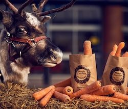 Morrisons to give away 200,000 wonky carrots for Rudolph to help reduce farm waste