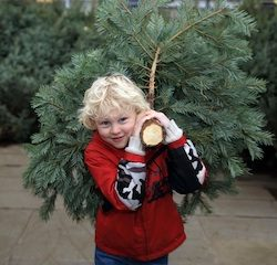 Wyevale Garden Centres predicts sales surge on Christmas trees this weekend