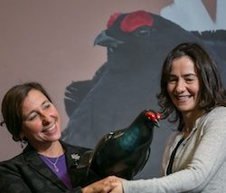 The Famous Grouse and RSPB toast £600K fundraising for Black Grouse Conservation