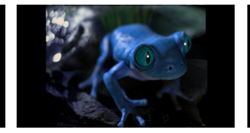 Bud Light brings back the Frogs with new advertisement