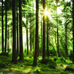 Smurfit Kappa takes another stride forward in reaching sustainability goals