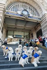 A first for Waterloo as performing dog troupe takes over station