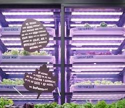 M&S partners with infarm to deliver fresh produce grown and harvested in chain's London stores