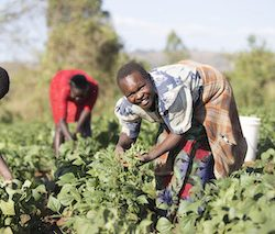 Aldi extends Farm Africa partnership