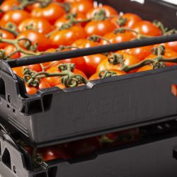 Polymer Logistics helps tomato producer optimise supply chain with bespoke solution