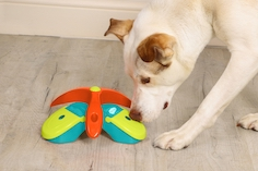Pet Brands releases a boredom-busting range of bamboozling brain games for dogs