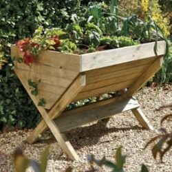 Hayes Garden World launches online 'Grow Your Own' range due to lockdown