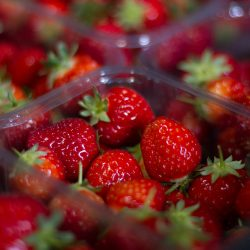 Scottish grown AVA strawberries now available in supermarkets across the UK
