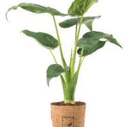 Family run B2B corporate plant business moves into B2C houseplant retail business